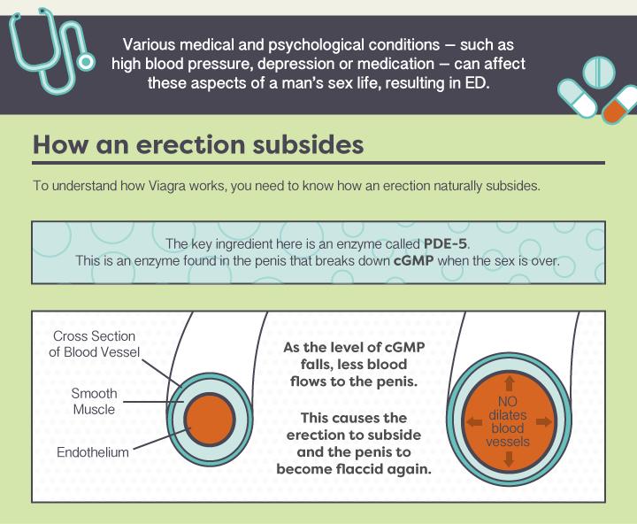 How-does-Viagra-work-V2-3