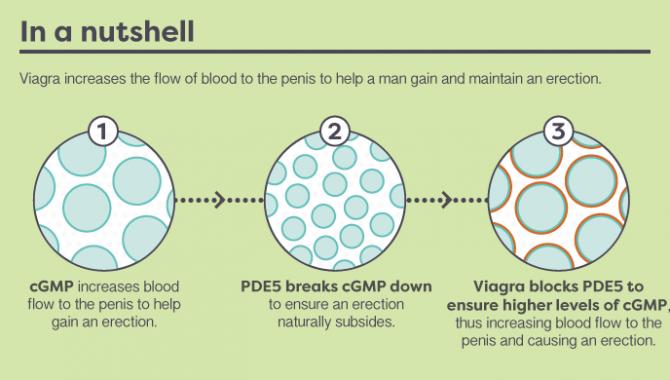 Come funziona il Viagra?