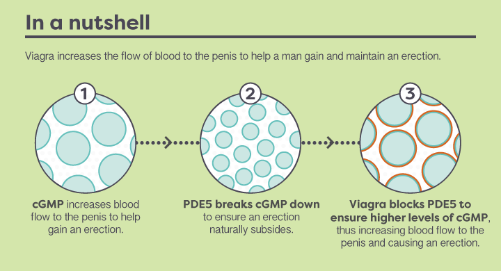 How-does-Viagra-work-V2-6